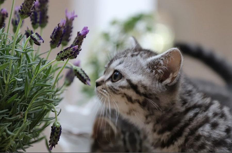 Das verspielte Kätzchen im Garten