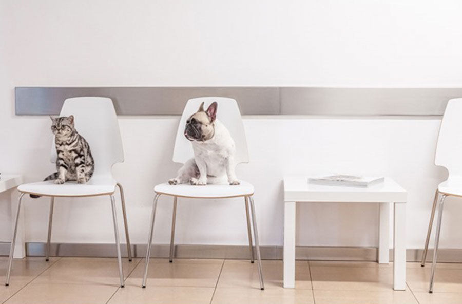 Das Wartezimmer der Kleintierpraxis Reithofen
